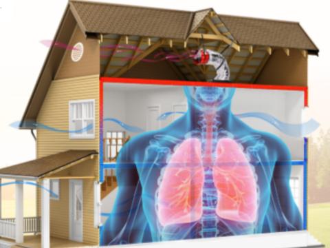 House Lung no bg